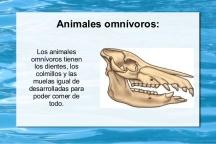 los-dientes-y-la-alimentacin-de-los-animales-4-638