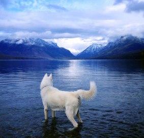 perro-fotos-naturaleza